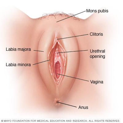 vulvar cancer - all you need to know - vezeeta, Human Body